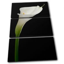 Calla Lily Flowers Floral - 13-1215(00B)-TR32-PO